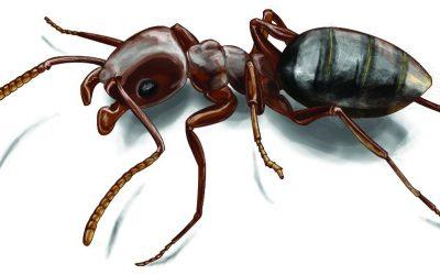 شركة مكافحة النمل الاسود بجازان – 0509062008